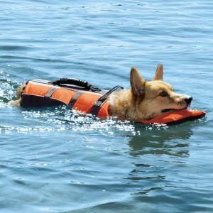 malinois-dog-life-jacket